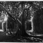 """1938 Estate al Giardino Scotto o Giardino Scotto (esposto alla  IX Rassegna Provinciale - la foto reca la dicitura: """"Proprietà Municipio di Pisa"""")"""