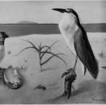 """1938  Uccelli sul mare (Pulcinella e nitticara maschio. Esposto alla IX Rassegna Provinciale.  La foto reca la dicitura: """"Proprietà S.M. il Re"""""""