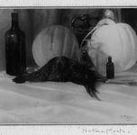 1919  Natura morta con gallo e zucche