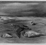 1936 - 40  Uccelli sulla spiaggia